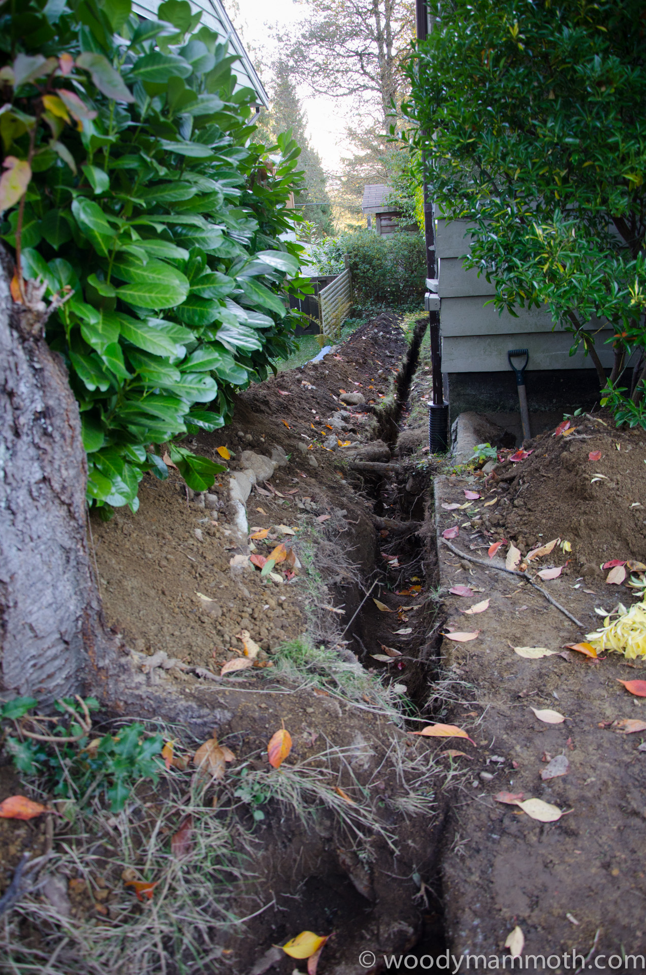 "My contribution:  a 60' long, 30"" deep trench...only to be filled in just a few days later."